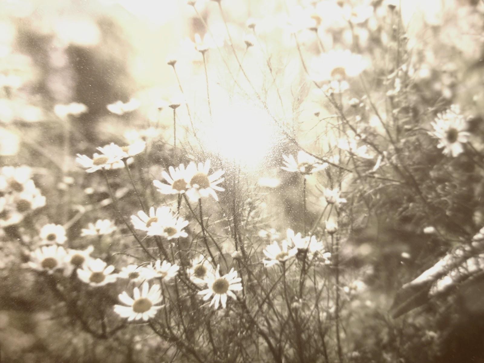 sepia flowers